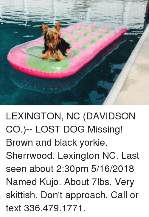Lexington Nc Davidson Co Lost Dog Missing Brown And Black Yorkie