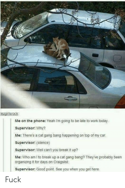 Craigslist, Gang Bang, and Phone: lezgirisrock  Me on the phone: Yeah Im going to be late to work today  Supervisor: Why?  Me: There's a cat gang bang happening on top of my car.  Supervisor: (Silence)  Supervisor: Well can't you break it up?  Me: Who am I to break up a cat gang bang? They've probably been  organizing it for days on Craigslist  Supervisor: Good point. See you when you get here Fuck