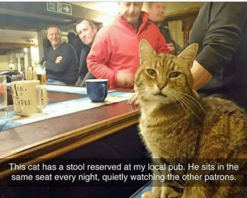 Memes, 🤖, and Cat: LIC.  This cat has a stool reserved at my local pub. He sits in the  same seat every night, quietly watching the other patrons.