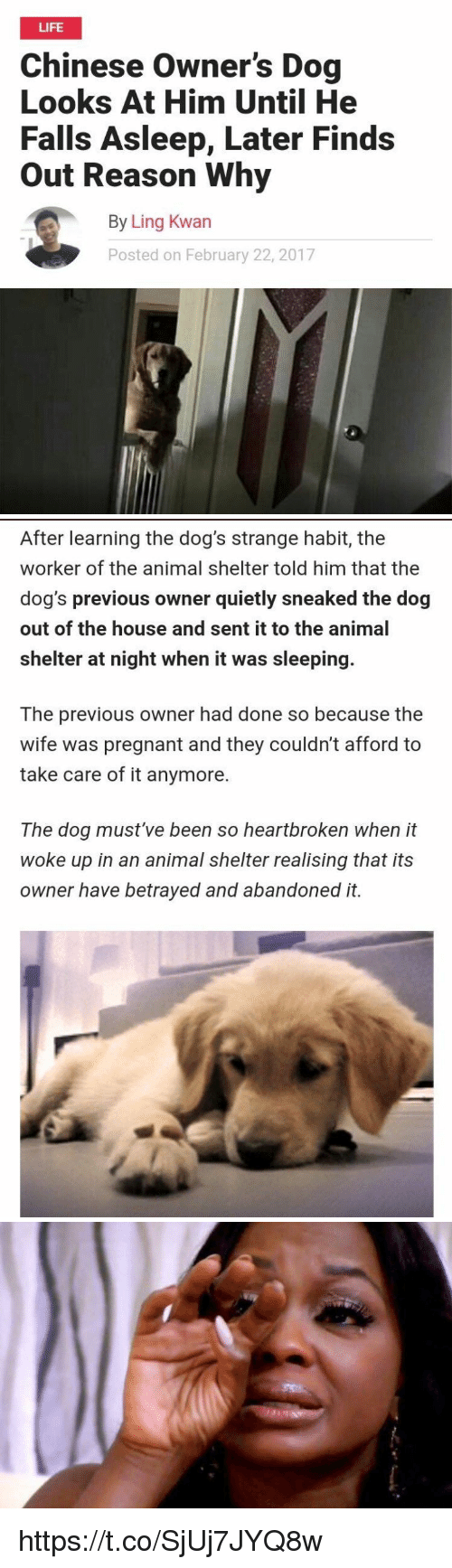 Dogs, Life, and Pregnant: LIFE  Chinese Owner's Dog  Looks At Him Until He  Falls Asleep, Later Finds  Out Reason Why  By Ling Kwan  Posted on February 22, 2017   After learning the dog's strange habit, the  worker of the animal shelter told him that the  dog's previous owner quietly sneaked the dog  out of the house and sent it to the animal  shelter at night when it was sleeping.  The previous owner had done so because the  wife was pregnant and they couldn't afford to  take care of it anymore.  The dog must've been so heartbroken when it  woke up in an animal shelter realising that its  owner have betrayed and abandoned it. https://t.co/SjUj7JYQ8w