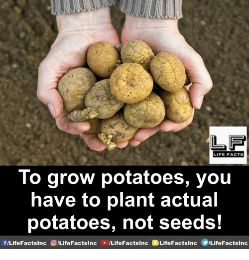 Facts, Life, and Memes: LIFE FACTS  lo grow potatoes, youu  have to plant actual  potatoes, not seeds!