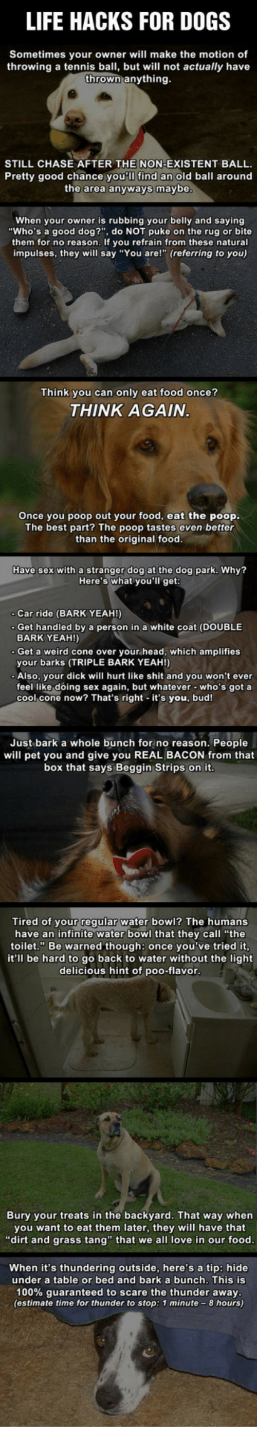 25 best memes about good dogs good dogs memes