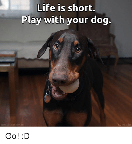 Life, Memes, and 🤖: Life is short.  Play with your dog.  po  nii@f  K9 Instinct Go! :D