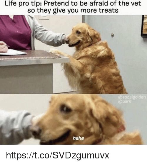 Life, Memes, and Pro: Life pro tip: Pretend to be afraid of the vet  so they give you more treats  rk  hehe https://t.co/SVDzgumuvx