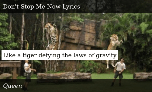 Like A Tiger Defying The Laws Of Gravity Donald Trump Meme On Meme