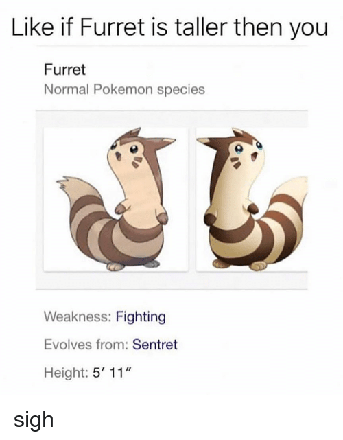 "Memes, Pokemon, and 🤖: Like if Furret is taller then you  Furret  Normal Pokemon species  Weakness: Fighting  Evolves from: Sentret  Height: 5' 11"" sigh"