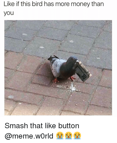 Funny, Meme, and Money: Like if this bird has more money than  you Smash that like button @meme.w0rld 😭😭😭