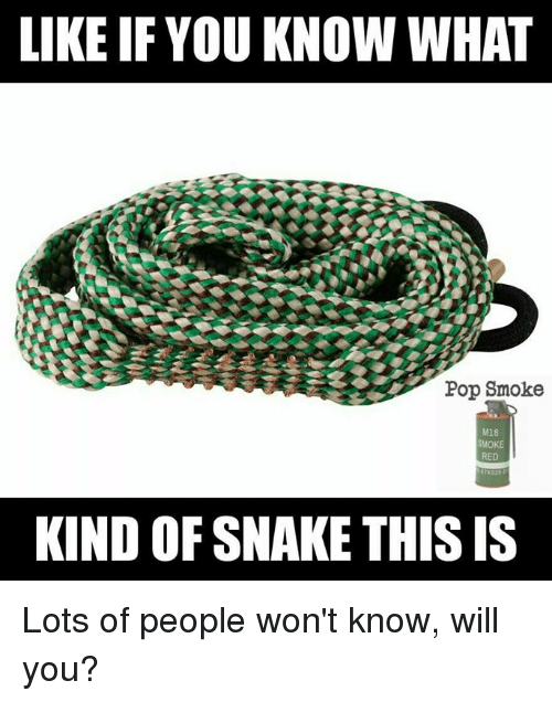 Pop, Snake, and Military: LIKE IF YOU KNOW WHAT  Pop Smoke  M18  SMOKE  RED  KIND OF SNAKE THIS IS Lots of people won't know, will you?