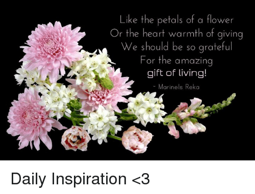 like the petals of a flower or the heart warmth of giving we should