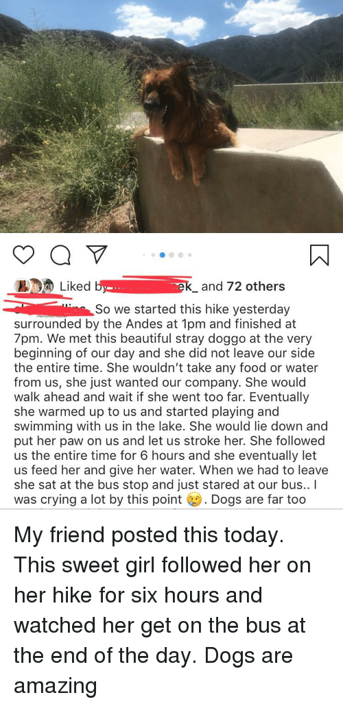 Beautiful, Crying, and Dogs: Liked b-  ek_and 72 others  in So we started this hike yesterday  surrounded by the Andes at 1pm and finished at  7pm. We met this beautiful stray doggo at the very  beginning of our day and she did not leave our side  the entire time. She wouldn't take any food or water  from us, she just wanted our company. She would  walk ahead and wait if she went too far. Eventually  she warmed up to us and started playing and  swimming with us in the lake. She would lie down and  put her paw on us and let us stroke her. She followed  us the entire time for 6 hours and she eventually let  us feed her and give her water. When we had to leave  she sat at the bus stop and just stared at our bus.. I  was crying a lot by this point Dogs are far too