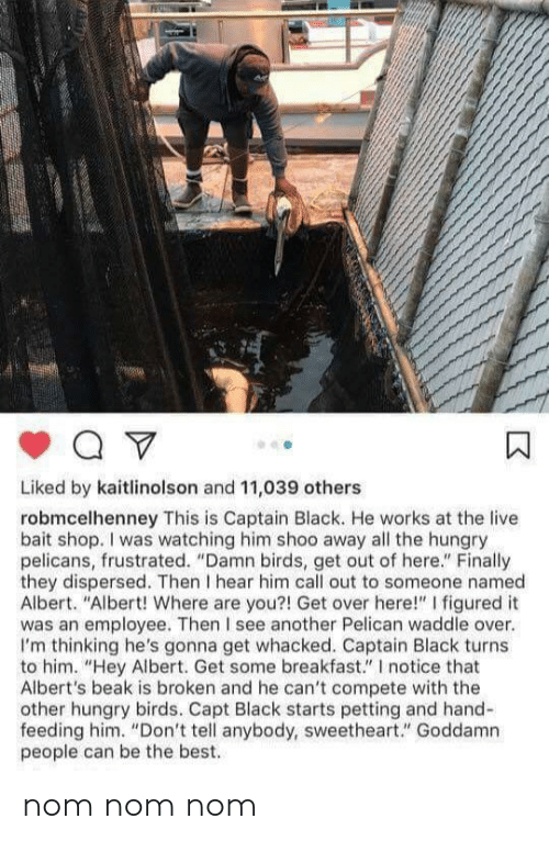 """Hungry, Best, and Birds: Liked by kaitlinolson and 11,039 others  robmcelhenney This is Captain Black. He works at the live  bait shop. I was watching him shoo away all the hungry  pelicans, frustrated. """"Damn birds, get out of here."""" Finally  they dispersed. Then I hear him call out to someone named  Albert. """"Albert! Where are you?! Get over here!"""" I figured it  was an employee. Then I see another Pelican waddle over.  I'm thinking he's gonna get whacked. Captain Black turns  to him. """"Hey Albert. Get some breakfast."""" I notice that  Albert's beak is broken and he can't compete with the  other hungry birds. Capt Black starts petting and hand-  feeding him. """"Don't tell anybody, sweetheart."""" Goddamn  people can be the best. nom nom nom"""