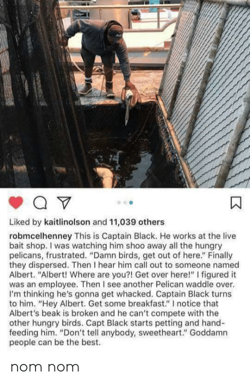 """Hungry, Best, and Birds: Liked by kaitlinolson and 11,039 others  robmcelhenney This is Captain Black. He works at the live  bait shop. I was watching him shoo away all the hungry  pelicans, frustrated. """"Damn birds, get out of here."""" Finally  they dispersed. Then I hear him call out to someone named  Albert. """"Albert! Where are you?! Get over here!"""" I figured it  was an employee. Then I see another Pelican waddle over.  I'm thinking he's gonna get whacked. Captain Black turns  to him. """"Hey Albert. Get some breakfast."""" I notice that  Albert's beak is broken and he can't compete with the  other hungry birds. Capt Black starts petting and hand-  feeding him. """"Don't tell anybody, sweetheart."""" Goddamn  people can be the best. nom nom"""