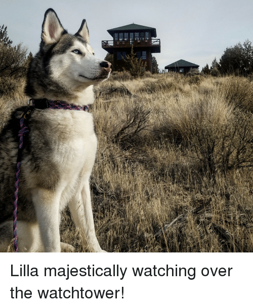 Watching, Over, and The: Lilla majestically watching over the watchtower!