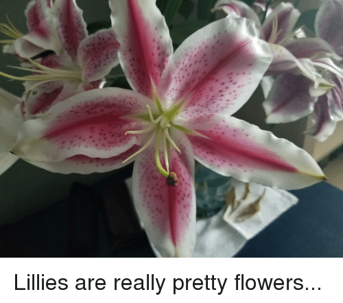 Flowers and flowers meme on me flowers dank memes and really mightylinksfo