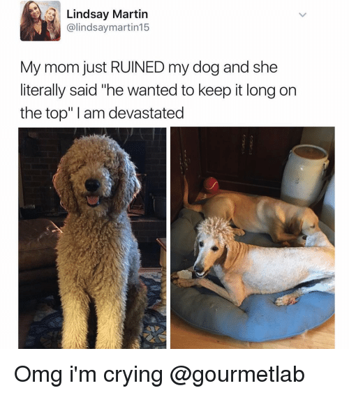 """Martin, Girl Memes, and My Mom: Lindsay Martin  @lindsay martin15  My mom just RUINED my dog and she  literally said """"he wanted to keep it long on  the top"""" am devastated Omg i'm crying @gourmetlab"""
