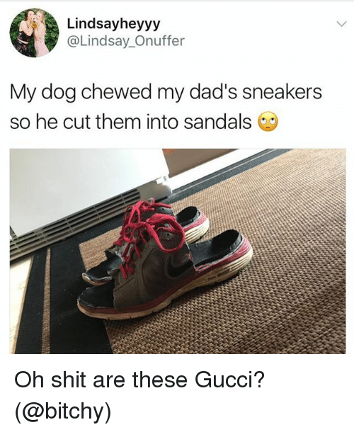 Gucci, Shit, and Sneakers: Lindsayheyyy  @Lindsay_Onuffer  My dog chewed my dad's sneakers  so he cut them into sandals Oh shit are these Gucci? (@bitchy)