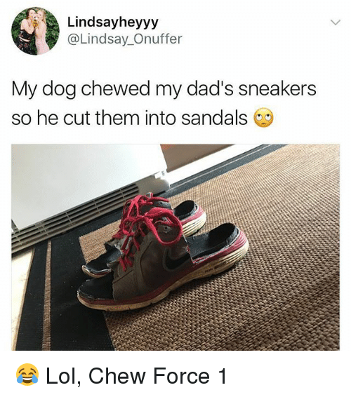 Lol, Memes, and Sneakers: Lindsayheyyy  @Lindsay._Onuffer  My dog chewed my dad's sneakers  so he cut them into sandals 😂 Lol, Chew Force 1