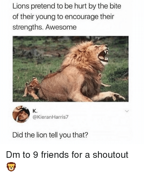Friends, Memes, and Lion: Lions pretend to be hurt by the bite  of their young to encourage their  strengths. Awesome  K.  @KieranHarris7  Did the lion tell you that? Dm to 9 friends for a shoutout 🦁