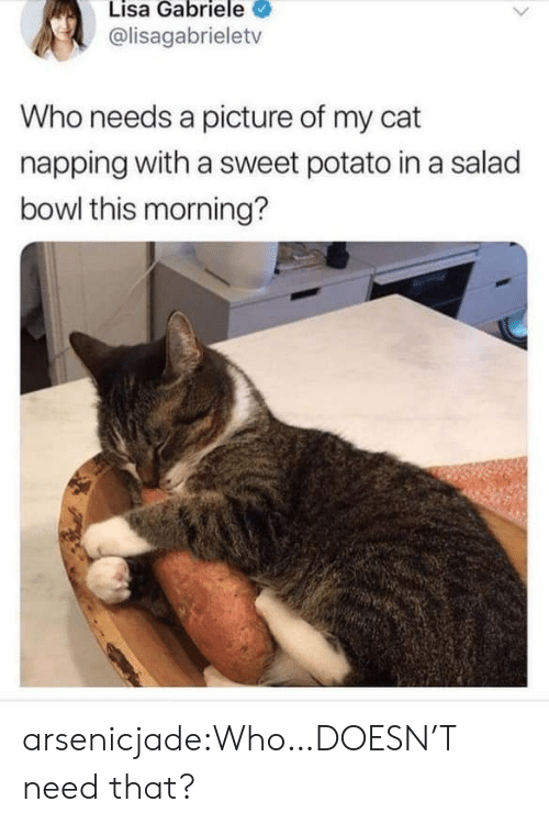 Target, Tumblr, and Blog: Lisa Gabriele  @lisagabrieletv  Who needs a picture of my cat  napping with a sweet potato in a salad  bowl this morning? arsenicjade:Who…DOESN'T need that?