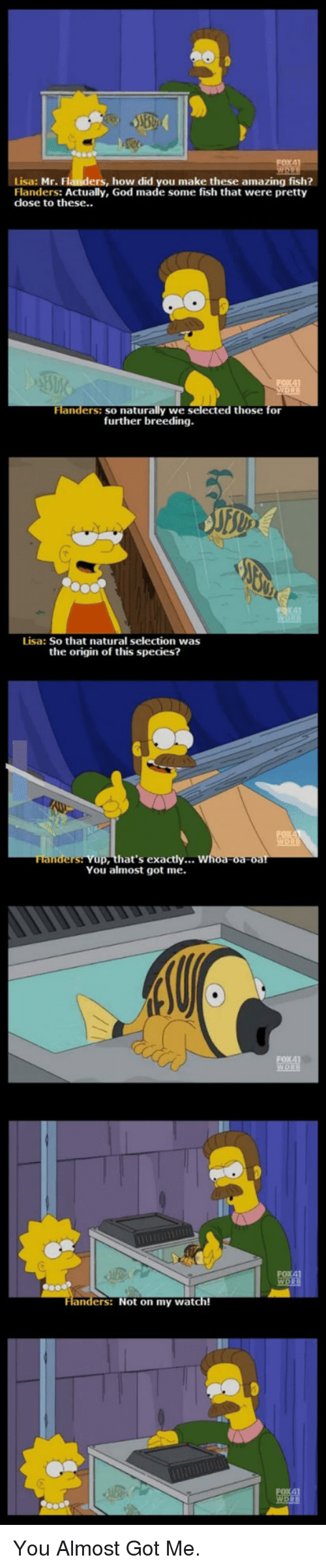 God, Fish, and Watch: Lisa: Mr. Flanders, how did you make these amazing fish?  Flanders: Actually, God made some fish that were pretty  dose to these..  naturally we selected those for  further breeding  Flanders: so  Lisa: So that natural selection was  the origin of this species?  hat's exactly...  You almost got me.  ers: Not on my watch! <p>You Almost Got Me.</p>