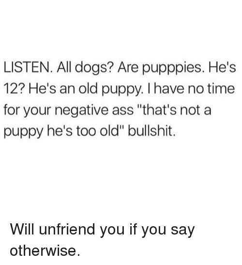 "Ass, Dogs, and Memes: LISTEN. All dogs? Are pupppies. He's  12? He's an old puppy. I have no time  for your negative ass ""that's not a  puppy he's too old"" bullshit. Will unfriend you if you say otherwise."