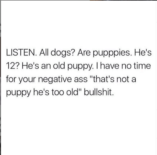 """Ass, Dogs, and Relationships: LISTEN. All dogs? Are pupppies. He's  12? He's an old puppy. I have no time  for your negative ass """"that's not a  puppy he's too old"""" bullshit."""