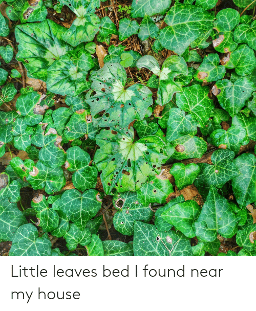 My House, House, and Bed: Little leaves bed I found near my house