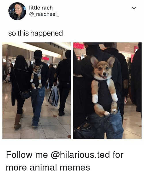 Funny, Memes, and Ted: little rach  @_raacheel  so this happened Follow me @hilarious.ted for more animal memes