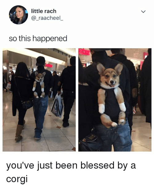Blessed, Corgi, and Relatable: little rach  @_raacheel  so this happened you've just been blessed by a corgi