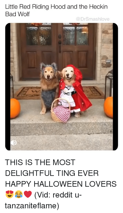 Bad, Halloween, and Memes: Little Red Riding Hood and the Heckin  Bad Wolf  @DrSmashlove THIS IS THE MOST DELIGHTFUL TING EVER HAPPY HALLOWEEN LOVERS 😍😂❤️ (Vid: reddit u-tanzaniteflame)