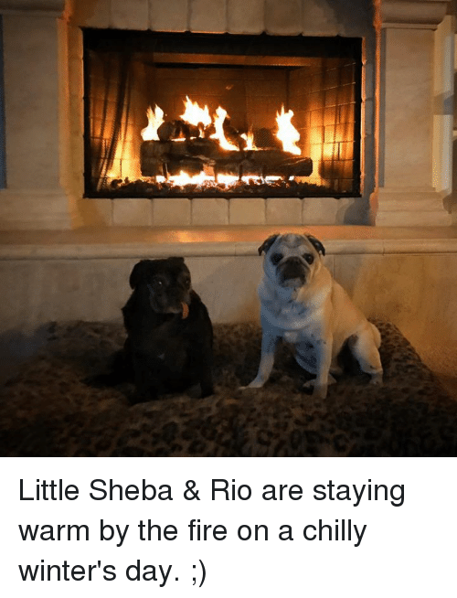Memes, Winter, and Chillis: Little Sheba & Rio are staying warm by the fire on a chilly winter's day. ;)