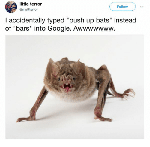 Google Push And Bats Little Terror Mattterror Follow I Accidentally Typed