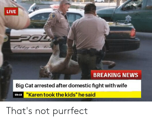 LIVE BREAKING NEWS Big Cat Arrested After Domestic Fight