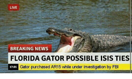 Fbi, Isis, and News: LIVE  BREAKING NEWS  FLORIDA GATOR POSSIBLE ISIS TIES  Gator purchased AR15 while under investigation by FBI  17:01