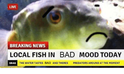 how to tell if fish is bad