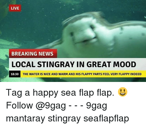 9gag, Memes, and Mood: LIVE  BREAKING NEWS  LOCAL STINGRAY IN GREAT MOOD  18:30  THE WATER IS NICE AND WARM AND HIS FLAPPY PARTS FEEL VERY FLAPPY INDEED Tag a happy sea flap flap. 😃 Follow @9gag - - - 9gag mantaray stingray seaflapflap