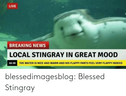 Blessed, Mood, and News: LIVE  BREAKING NEWS  LOCAL STINGRAY IN GREAT MOOD  18:30 THE WATER IS NICE AND WARM AND HIS FLAPPY PARTS FEEL VERY FLAPPY INDEED blessedimagesblog:  Blessed Stingray