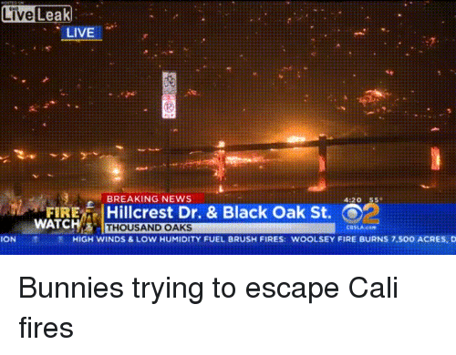 Live Leak LIVE BREAKING NEWS 420 55 FIRE | Hillcrest Dr & Black Oak