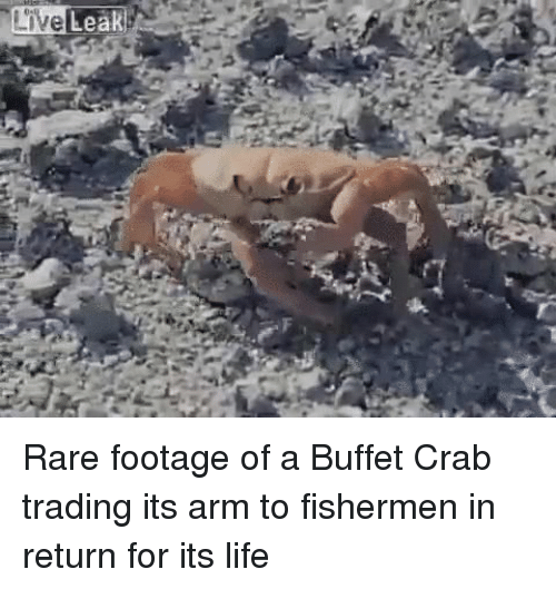 Live Leak! Rare Footage of a Buffet Crab Trading Its Arm to