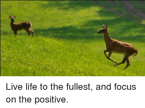 Live Life To The Fullest And Focus On The Positive Life Meme On Meme