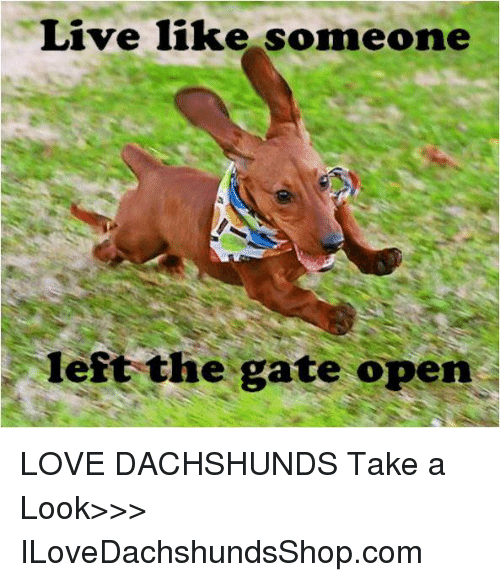 live like someone left the gate open love dachshunds take a look