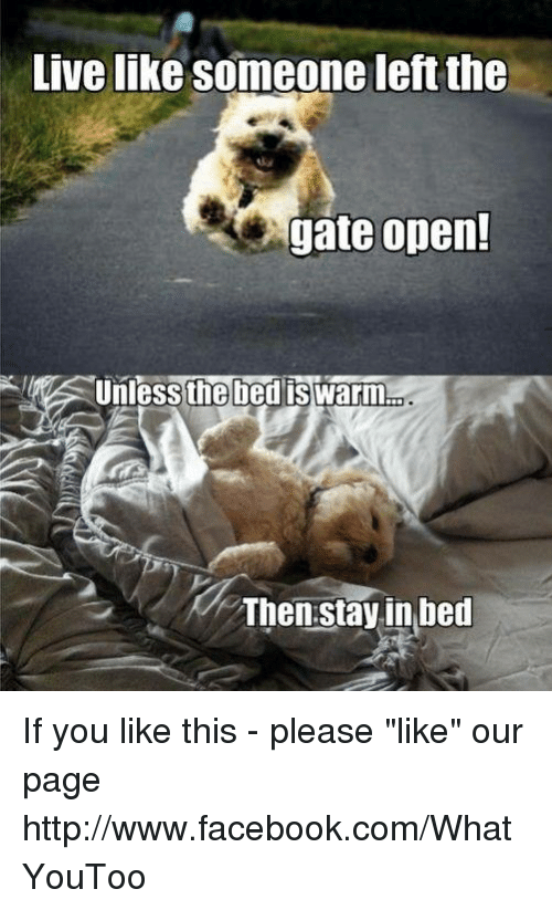 live like someone left the gate open unless the bed is warm then