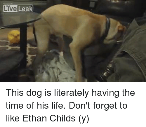 LiveLeak This Dog Is Literately Having the Time of His Life Don't