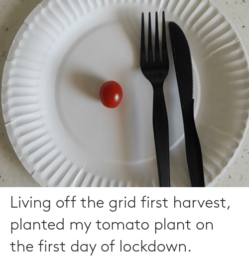 Living, Tomato, and Day: Living off the grid first harvest, planted my tomato plant on the first day of lockdown.