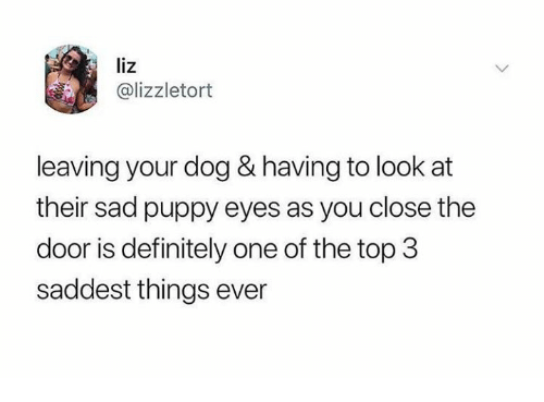 Dank, Definitely, and Puppy: liz  @lizzletort  leaving your dog & having to look at  their sad puppy eyes as you close the  door is definitely one of the top 3  saddest things ever