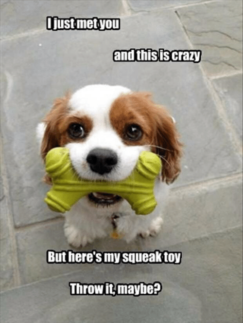 Crazy, You, and Toy: ljust met you  and this is crazy  But here's my squeak toy  Throwit,mayhe?