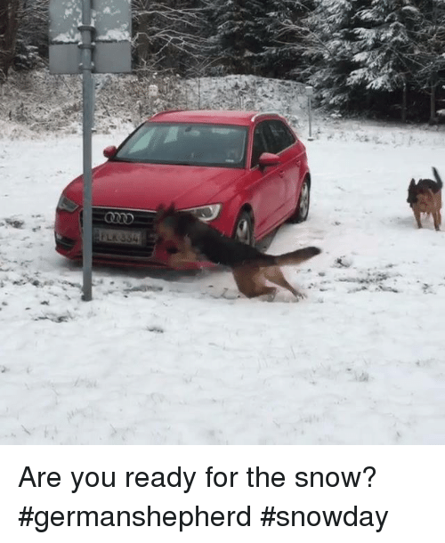 Memes, Snow, and 🤖: LK/354 Are you ready for the snow? #germanshepherd #snowday