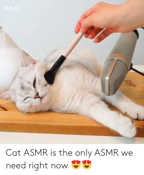 Dank, Asmr, and 🤖: LLO IANM Cat ASMR is the only ASMR we need right now 😍😍