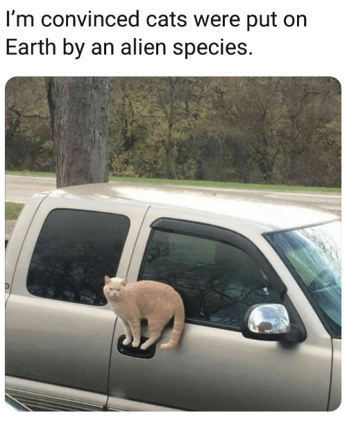 Cats, Alien, and Earth: l'm convinced cats were put on  Earth by an alien species.