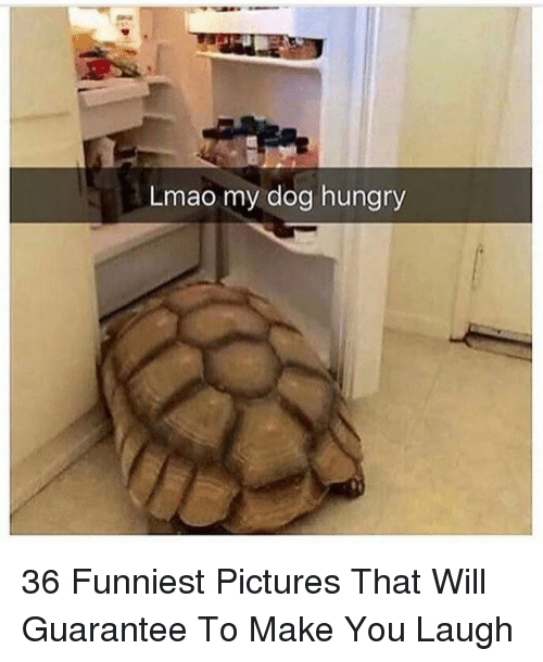 Hungry, Lmao, and Pictures: Lmao my dog hungry 36 Funniest Pictures That Will Guarantee To Make You Laugh